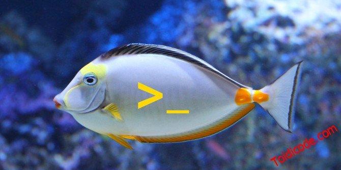 Fish shell công cụ tuyệt vời